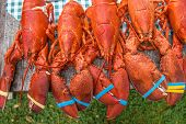 stock photo of lobster  - New England Lobsters  - JPG