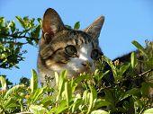 Hiding Cat poster