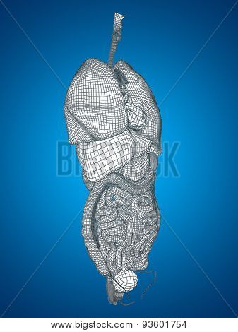 Concept or conceptual anatomical human man, 3D wireframe mesh digestive system on blue background