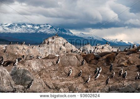 King Cormorant Colony, The Beagle Channel
