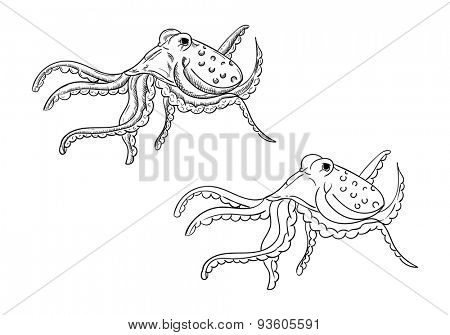 vector - Octopus - isolated on background