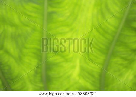 Green Blurred Foliage Background