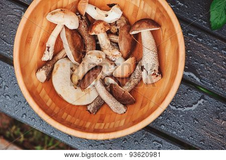 wild edible brown cap boletus mushrooms in wooden plate with water drops