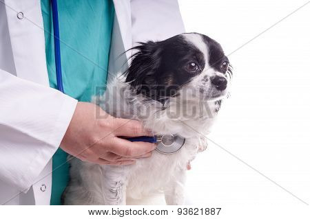 Vet And Dog, Chihuahua
