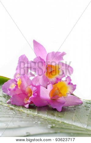 Lying down orchid with palm