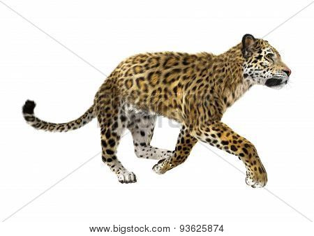 Bi g Cat Jaguar