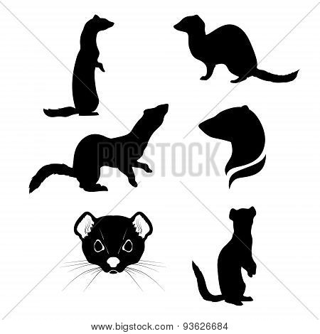 Ermine set vector