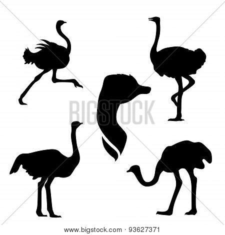 Ostrich set vector