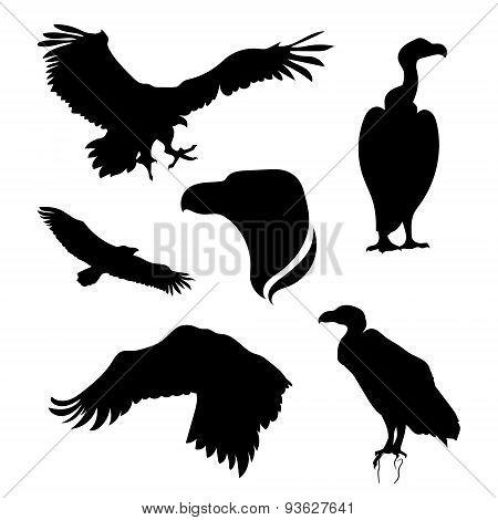 Vulture set vector