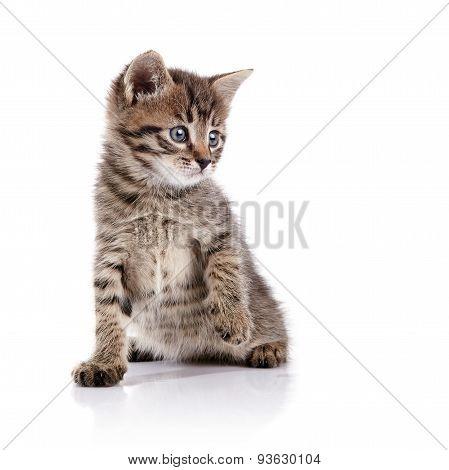 Striped Lovely Small Domestic Kitten.