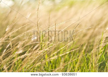 beautiful rural landscape with sunrise over a meadow
