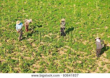Gardening In Myanmar