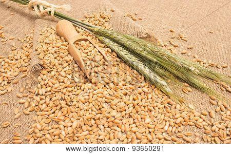 Wheat Grain On Canvas Close Up