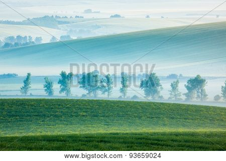 Moravian rolling landscape with row of trees in early morning haze. Moravia, Czech Republic