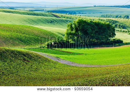 Moravian rolling landscape with trees. Moravia, Czech Republic