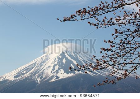 Mount Fuji And Sakura Not Blossom.