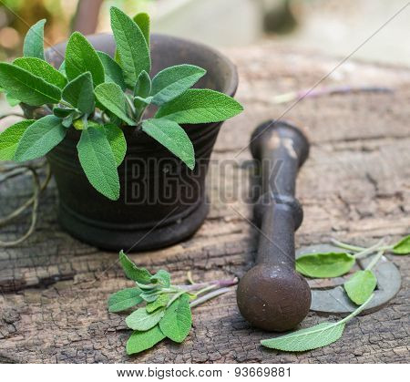 Fresh sage in a mortar