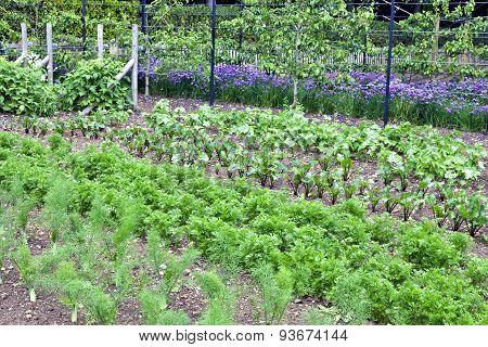Organic vegetable and fruit garden in summer