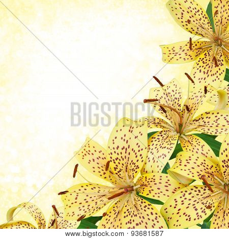yellow tiger lily flowers - border design