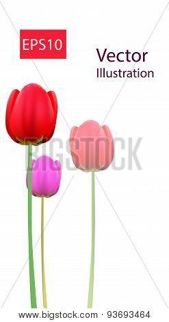 Tulip flowers baner