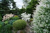 picture of conifers  - Beautiful spring garden design with flowering rhododendron and conifers - JPG