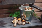 picture of edible  - wild edible orange and brown cap boletus mushrooms on wooden bench