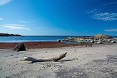 pic of driftwood  - Driftwood on a sandy beach with seaweed rocks and horizon - JPG