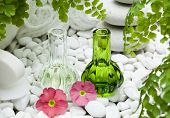 stock photo of primrose  - bottles with fragrance of primrose flowers spa products and treatments - JPG