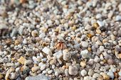 picture of hermit crab  - hermit crab in its shell crawling on the sand AoSane - JPG