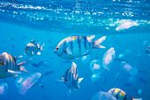 pic of sea-scape  - Coral fish in Red Sea - JPG