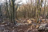 pic of bare-naked  - stone pathway in the forest with naked trees without foliage - JPG