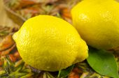 picture of decoupage  - Two fresh lemons on a decoupage decorated table - JPG