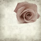 foto of pale  - textured old paper background with pale pink rose - JPG