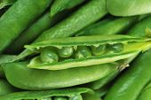 picture of sweet pea  - Freshly picked sweet green peas - JPG