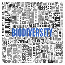 stock photo of biodiversity  - Close up BIODIVERSITY Text at the Center of Word Tag Cloud on White Background - JPG