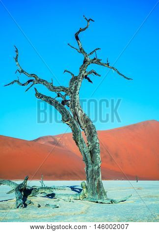 Orange dunes and dried trees. The bottom of dried lake Deadvlei. Ecotourism in Namib-Naukluft National Park, Namibia