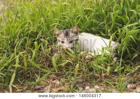 little cat in the grassland