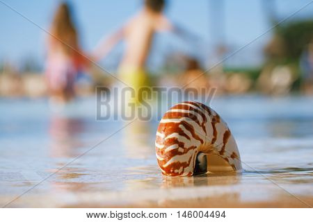 sea shell nautilus on swimming pool edge and kid running background, shallow dof