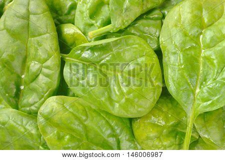 detail of spinach leaves - full frame