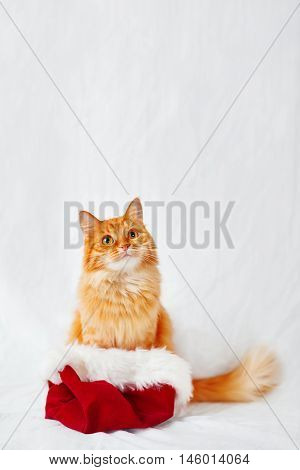 Ginger cat in Santa's hat. Christmas and New Year background with fluffy pet and place for text.