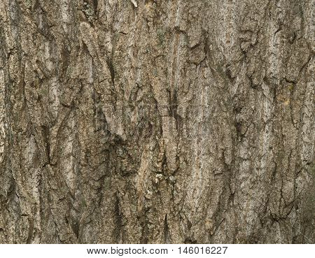 Tree bark texture. Old Wood Tree Texture Background Pattern. Highly detailed tree bark texture