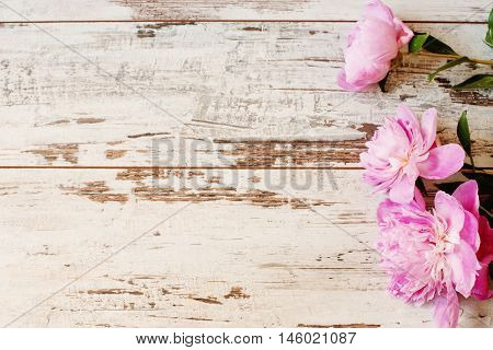 Stunning Pink Peonies On White Light Rustic Wooden Background. Copy Space, Floral Frame. Vintage, Ha