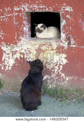 The cat looks at a cat sitting in a basement window of the house