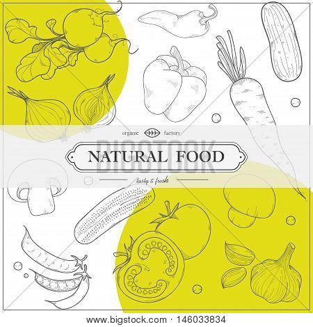 Trendy Vegetarian Restaurant Menu Design, High Detailed Vector Illustration With Radish, Carrots, Cu