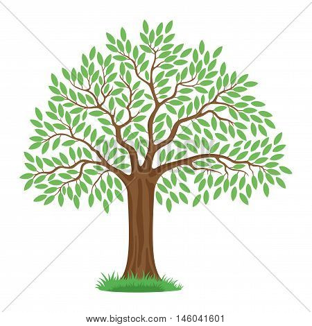 Beautiful tree with green leaves on a white background.