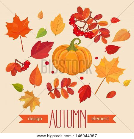 Color autumn leaves and pumpkin. Fall leaf set. Vector illustration EPS10