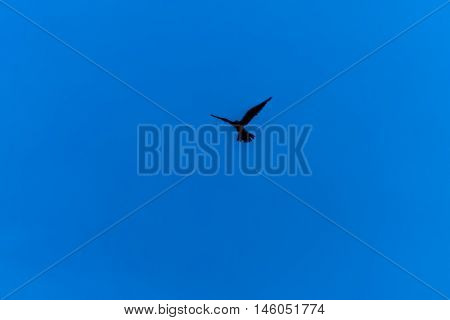 Silhouette of flying bird in clear blue sky
