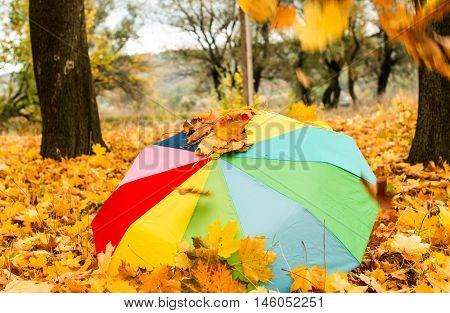 umbrella in the autumn park season, stroll, sunlight