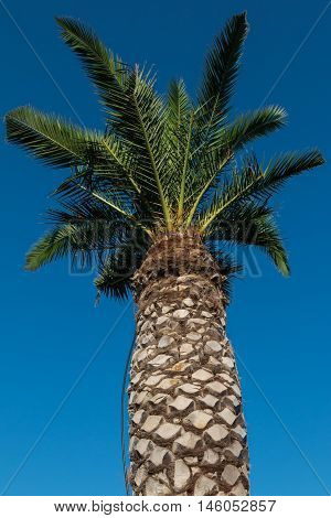 Green Palm Plants Vegetation, Nature Theme photo