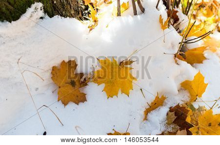 autumn leaves in the snow  light, layer, season